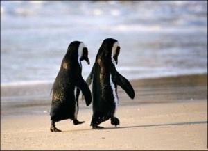 penguinlove